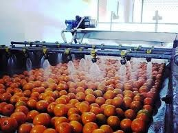Fruit Packing